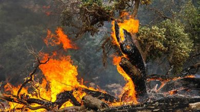 Photo of صادق محمدی بخشدار کوهمره : آتش سوزی در جنگلها و مراتع کوهمره مهار شد