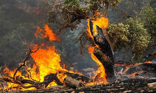 صادق محمدی بخشدار کوهمره : آتش سوزی در جنگلها و مراتع کوهمره مهار شد