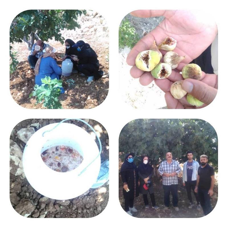 بازدید کارشناسان مرکز جهاد کشاورزی کوهمره نودان از باغستان روستای دوسیران