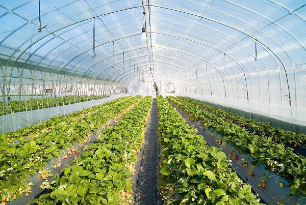 احداث گلخانه بزرگ صنعتی در شهر نودان توسط یک کار آفرین جوان نودانی