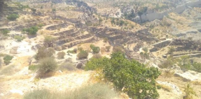 پیگیری و بررسی خسارت وارده به باغات دیم روستای دوسیران بر اثر آتش سوزی